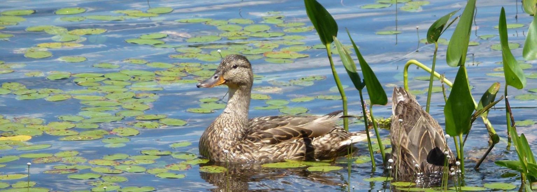 Lac Charlebois. Juillet 2012